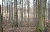 Račianske lesy